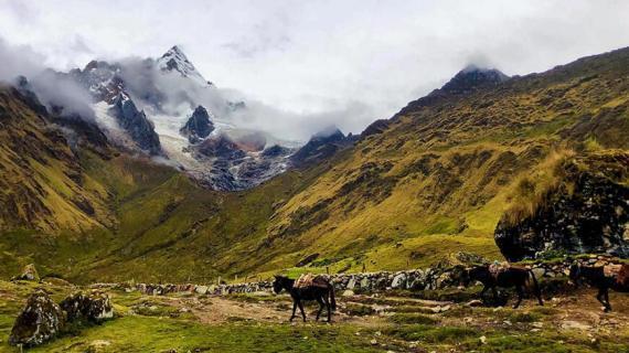Salkantay Trek - Wallking Horse